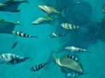 Fish Seychelles